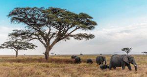 viaggiare-sicuri-in-tanzania